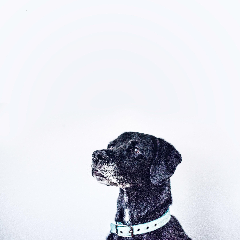Turvallisesti koiran kanssa