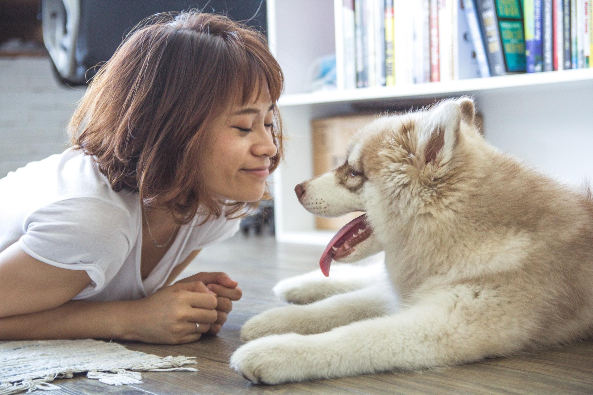 Sopivan koirarodun valinta