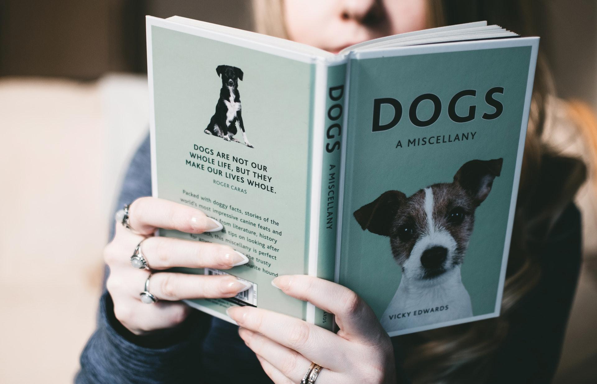 Yleisiä harhaluuloja koirista